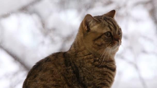 cat sitting on windows