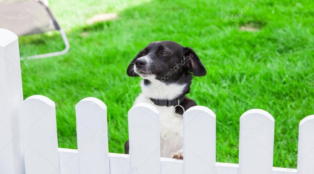 Hund Mit Blick Auf Den Garten Zaun Stockfoto C Zaschnaus 78508476