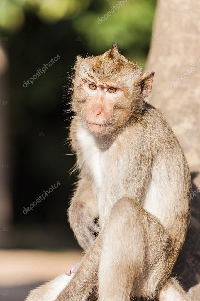 el pene del mono