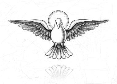 Dove in flight Vintage engraving