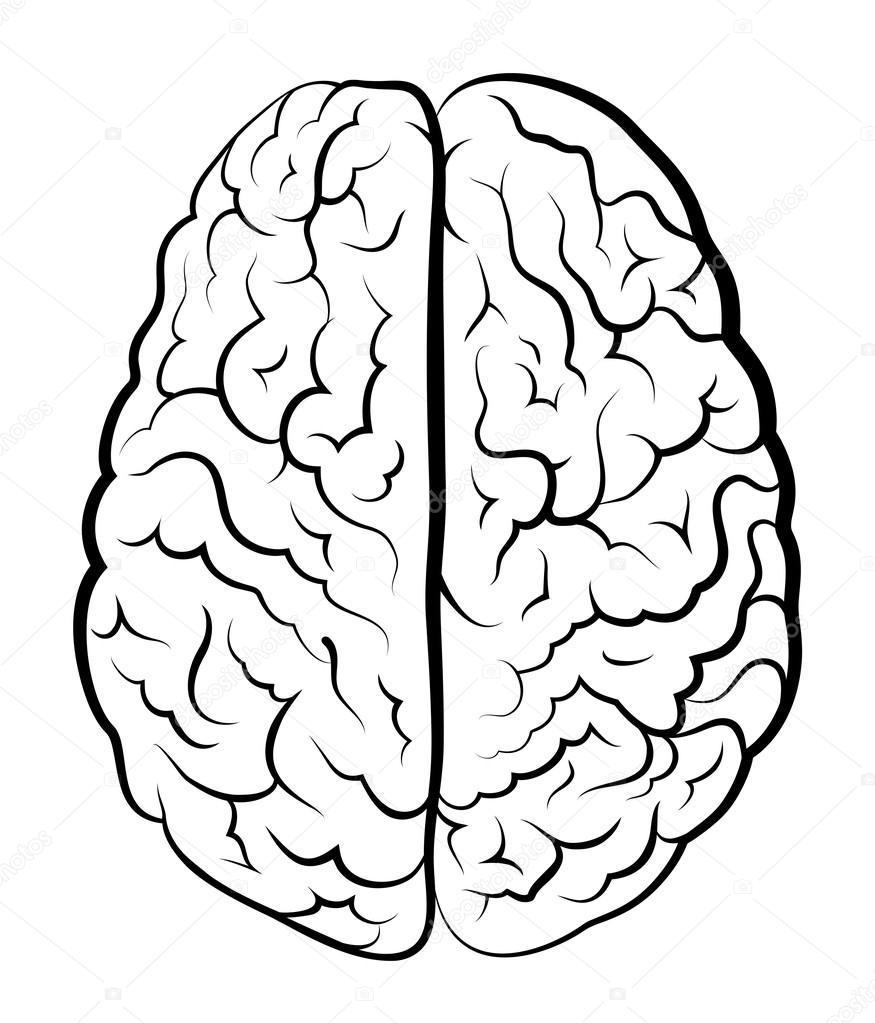 Imágenes Cerebro Humano Para Colorear Cerebro Humano Para