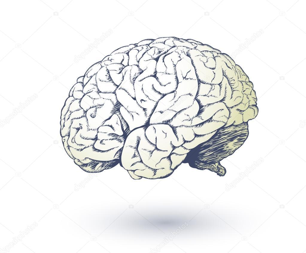 menschliche Gehirn zeichnen — Stockvektor © alexcosmos #65762605