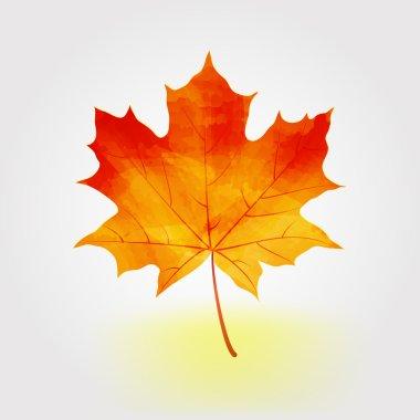 Autumn maple leaf vector illustration