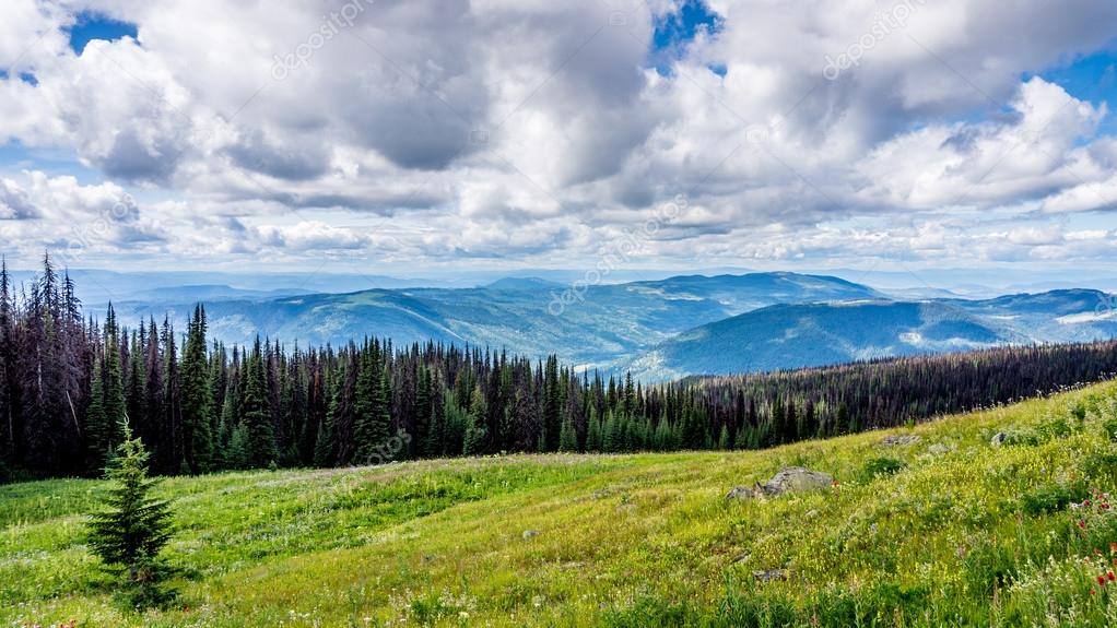 High Alpine Meadows of British Columbia with Flower and Pine Beetle Infected Trees