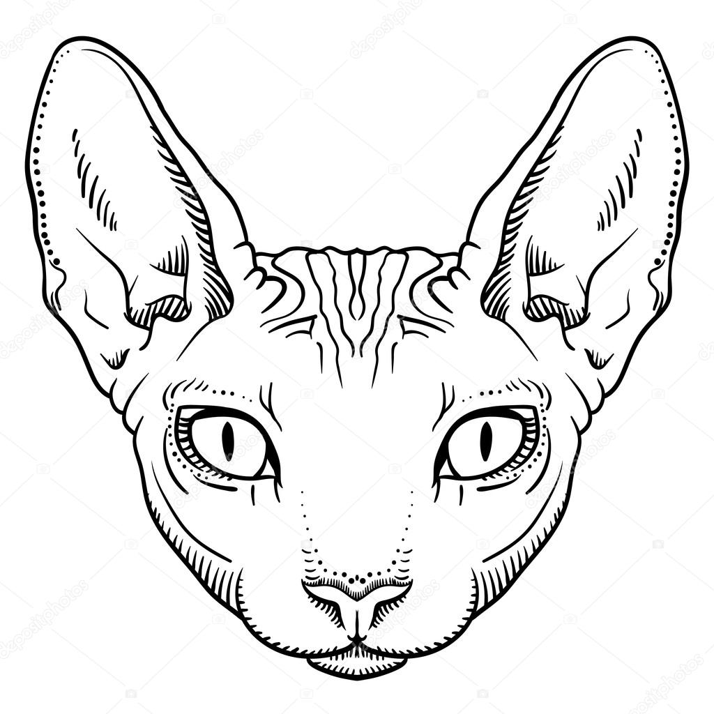 Hairless Sphinx Cat Face Graphics Outline Stock Vector