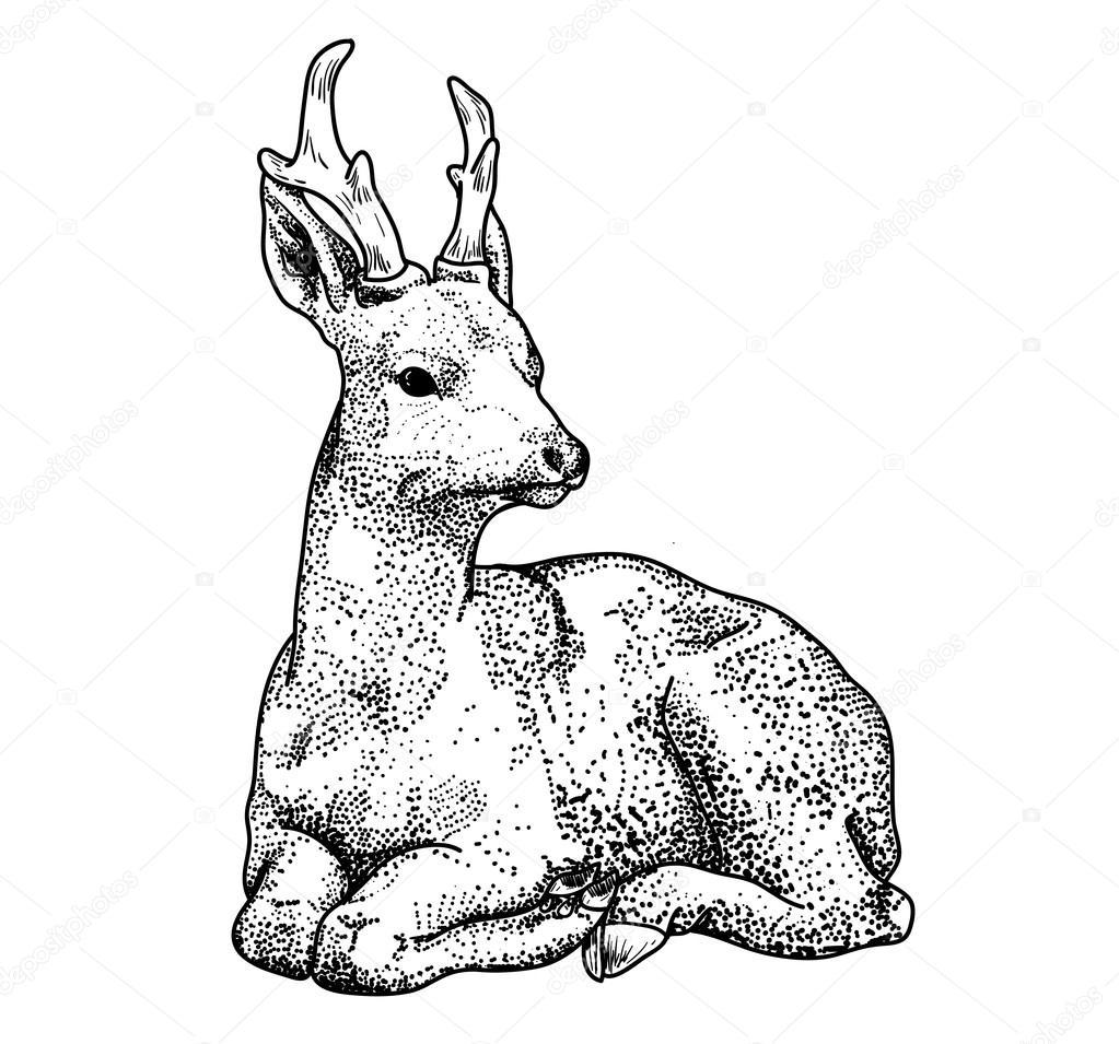 Points de cerf dessin contour image vectorielle - Dessin contour ...