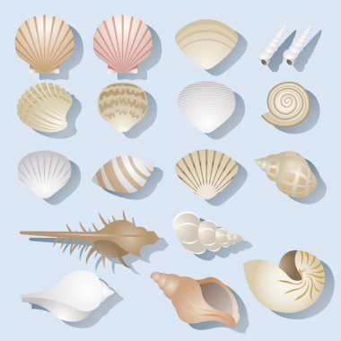 Sea Shell Objects Set
