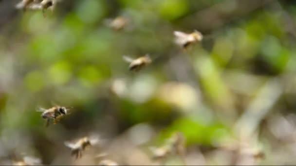 Rovarok méz méhek repülés