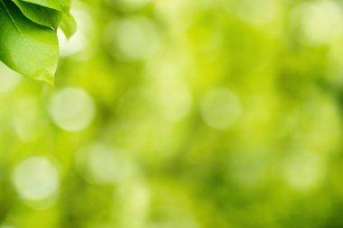 """Картина, постер, плакат, фотообои """"зеленый фон природы картины"""", артикул 73215439"""