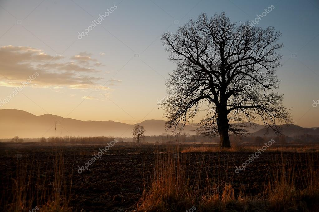 Oak tree on an rural landscape in autumn