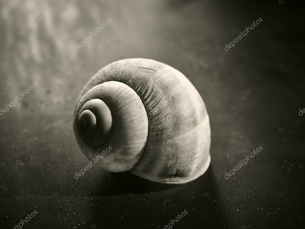 Radiocarbon dating snail shell