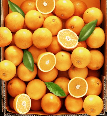 Sweet fresh and juicy oranges