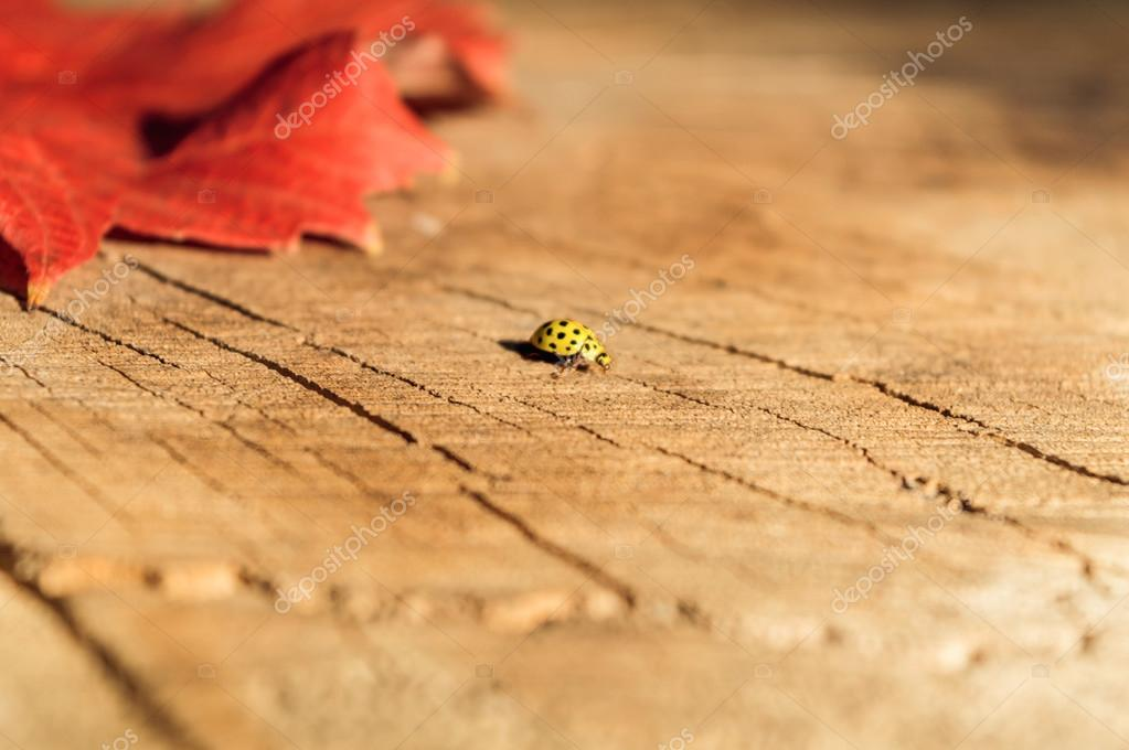 Yellow ladybug on a natural background