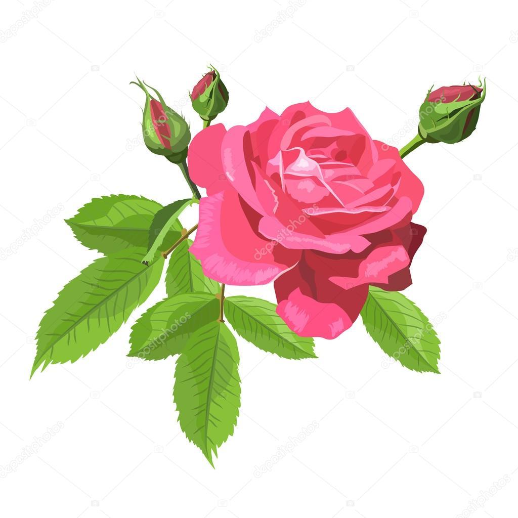 Znalezione obrazy dla zapytania róza grafika