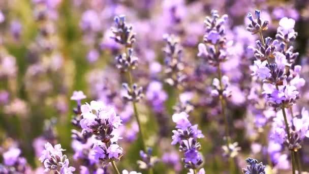 Květiny close-up