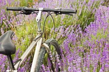 bicycle on a lavender field