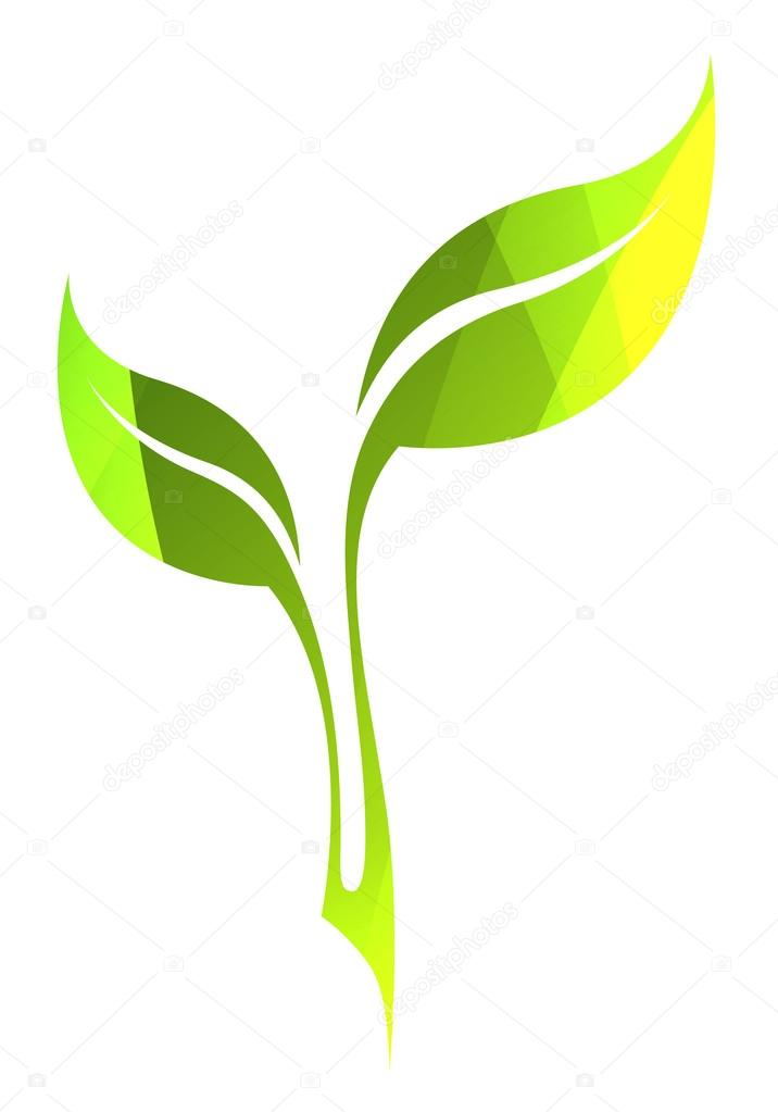 Vector green spring leaf isolated on white. Color eco icon.