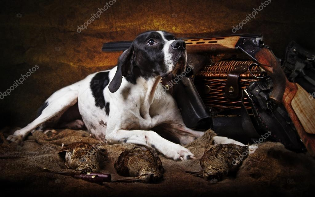 Hunting dog breed Poynter
