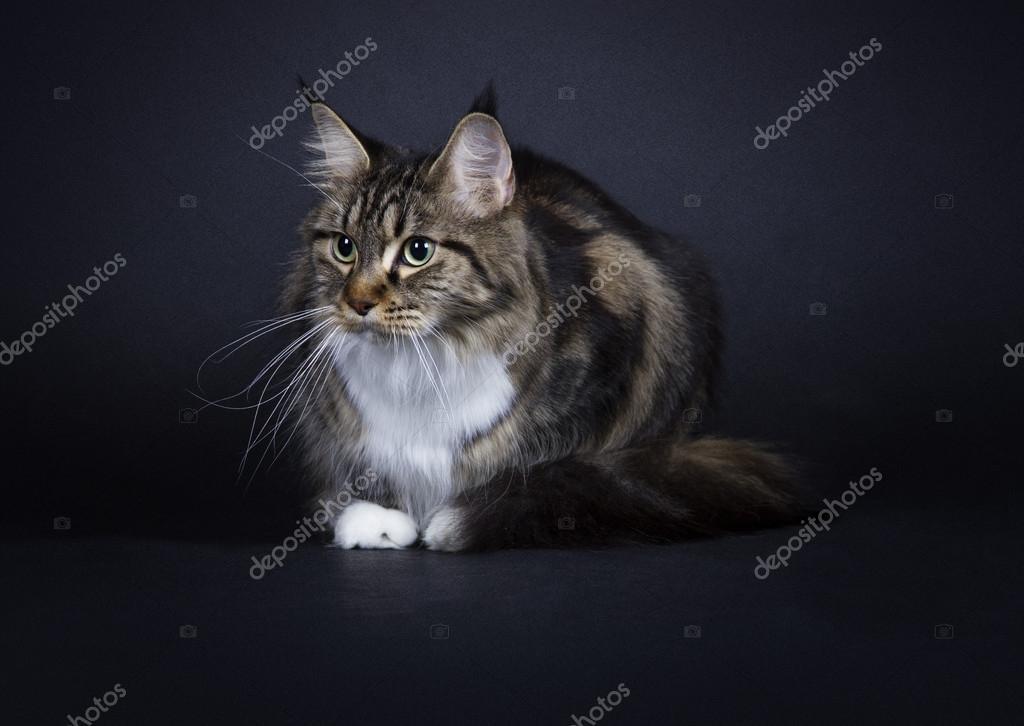 la figa nera gatto Desi moglie sesso anale