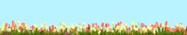 Spring meadow with sunny flowers. 3d rendering