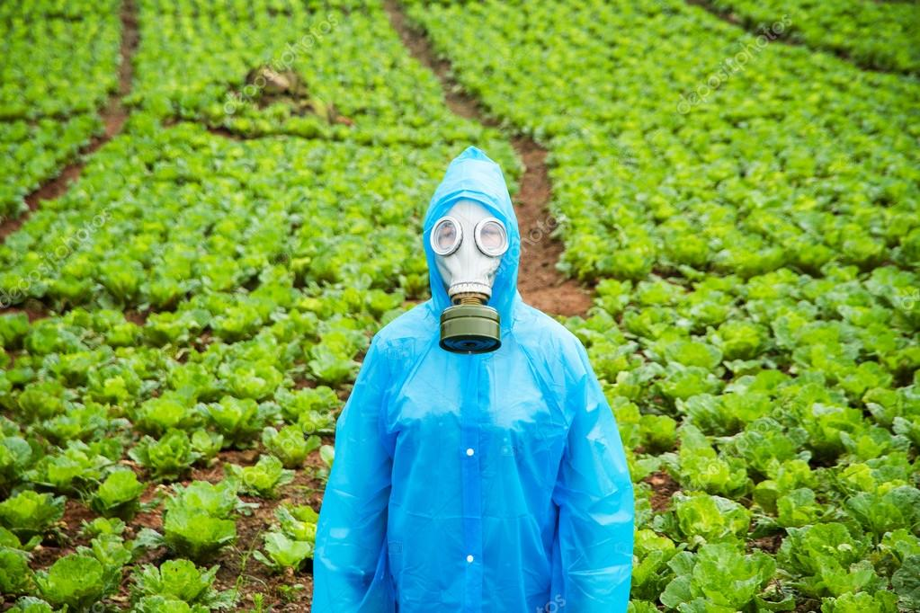A young girl wearing a gas mask and rainwear on a farm of lettuce on a rainy day.
