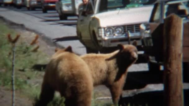 Grizzlys verursachen Stau am Straßenrand