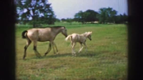 malý kůň hraje s matka koně