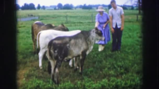 a woman petting her cows
