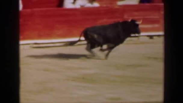 Bull animal charging man behind wall