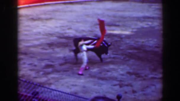 Classic torero bullfighter against angry bull