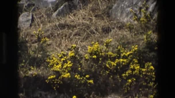 krásná příroda a žluté květy
