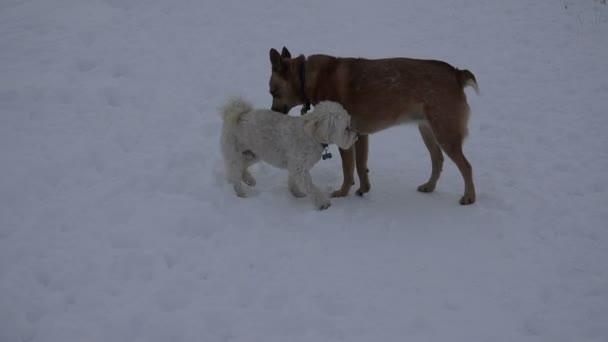 Psi na zasněženou krajinu zasedání