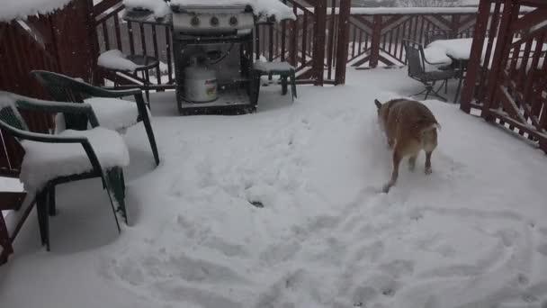 Kutya étkezési hópelyhek, vihar