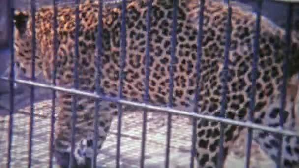 Gepard v malé kleci