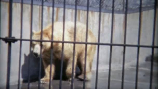 Grizzly bear just chillin in zoo home