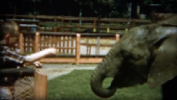 A gyerekek bébi elefánt etetés