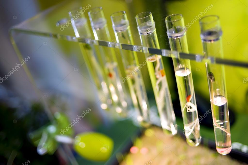 Test tubes with small sprouts plants