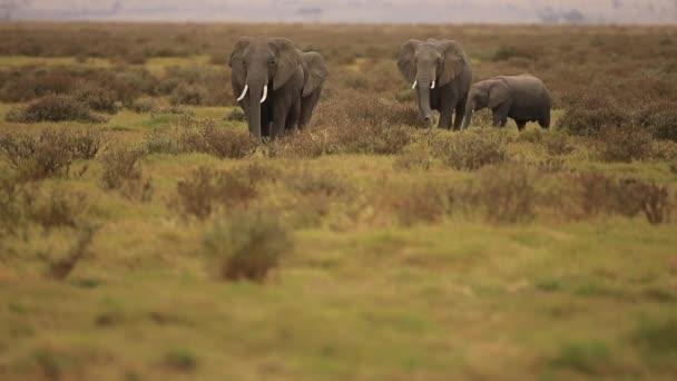 Elefánt Kenyában
