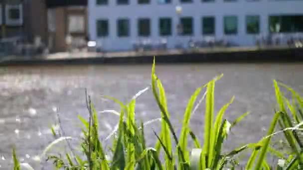Květiny průplav Amsterdam