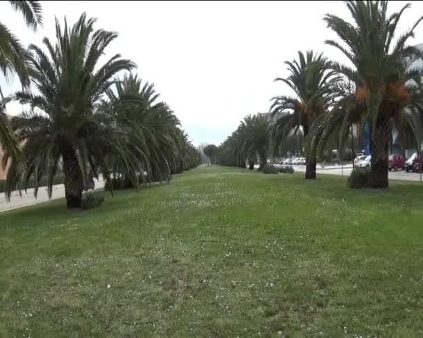 Gasse der Palmen