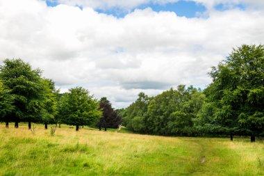 "Картина, постер, плакат, фотообои ""зеленый пейзаж в парке с голубым небом картины"", артикул 121132634"