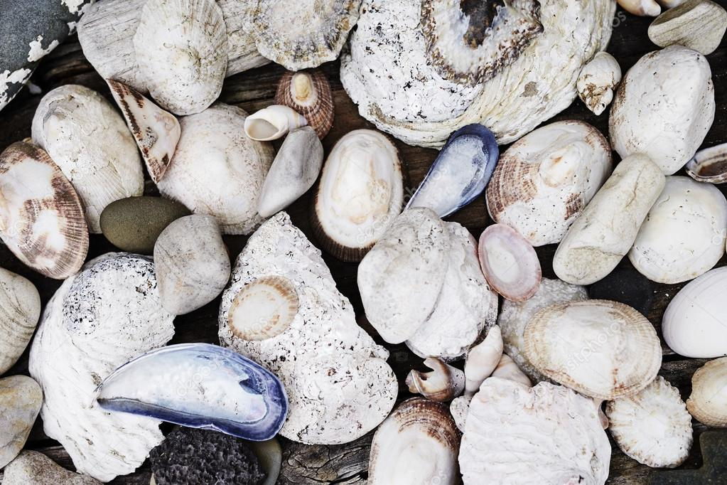 sea cockleshells and rocks
