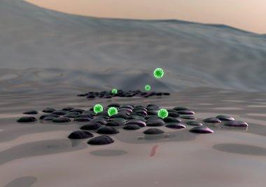 Beta cells, Macrophage