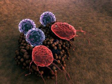 Fungus, virus