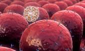 Bereich der Zellen