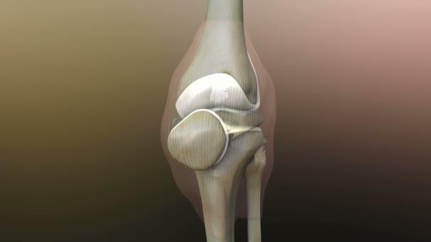 menschlichen Knie — Stockvideo © Ugreen #60620953