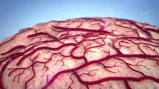 Mozek, urážka