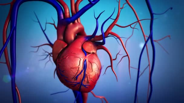menschliche Herz