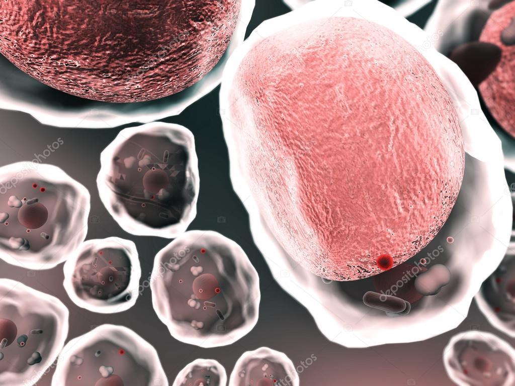Las células de grasa, células — Foto de stock © Ugreen #64710413