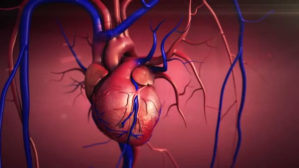 Menschliches Herz Anatomie — Stockvideo © Ugreen #65318955
